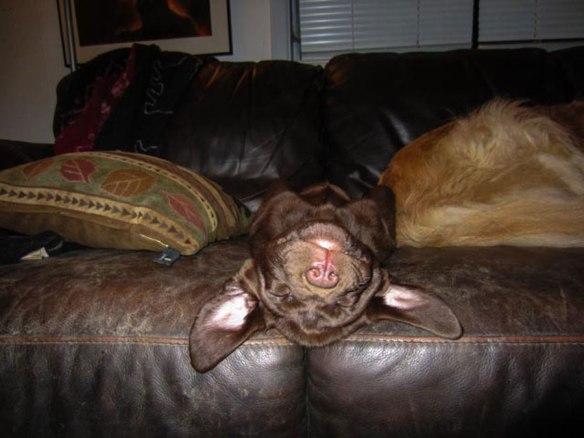 Raud-kennedy---Fleegle-Takes-a-Snooze