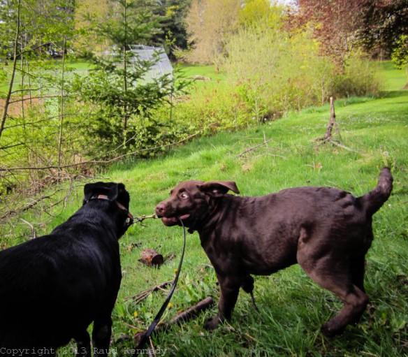 Raud Kennedy - Fleegle takes Zoe for a walk 2