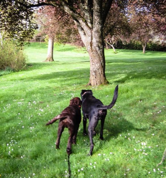 Raud Kennedy - Fleegle takes Zoe for a walk 3