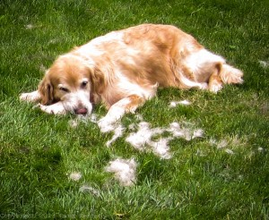 Raud Kennedy - Puppies
