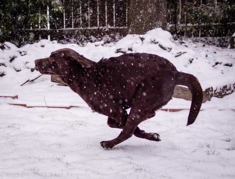 dog fiction - snow 2