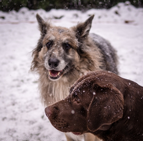 dog fiction - snow