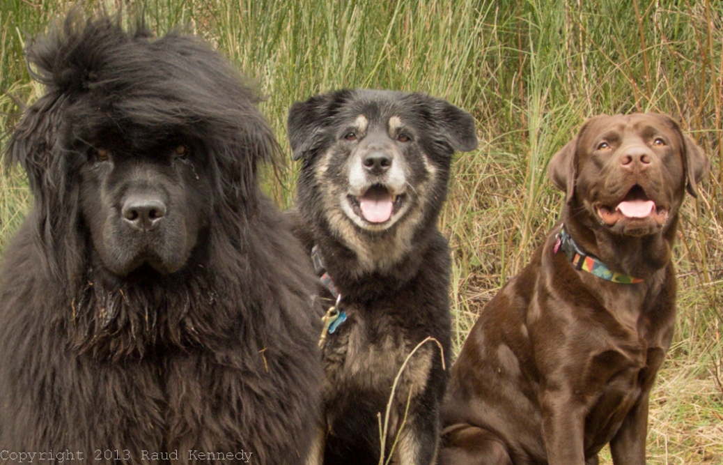 pet photography three amigos