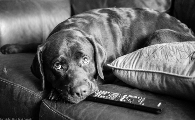 dog fiction - the remote