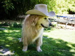 dog fiction john wayne