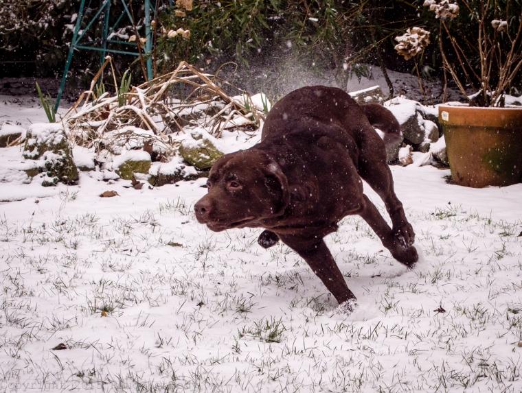 snow crazy dog