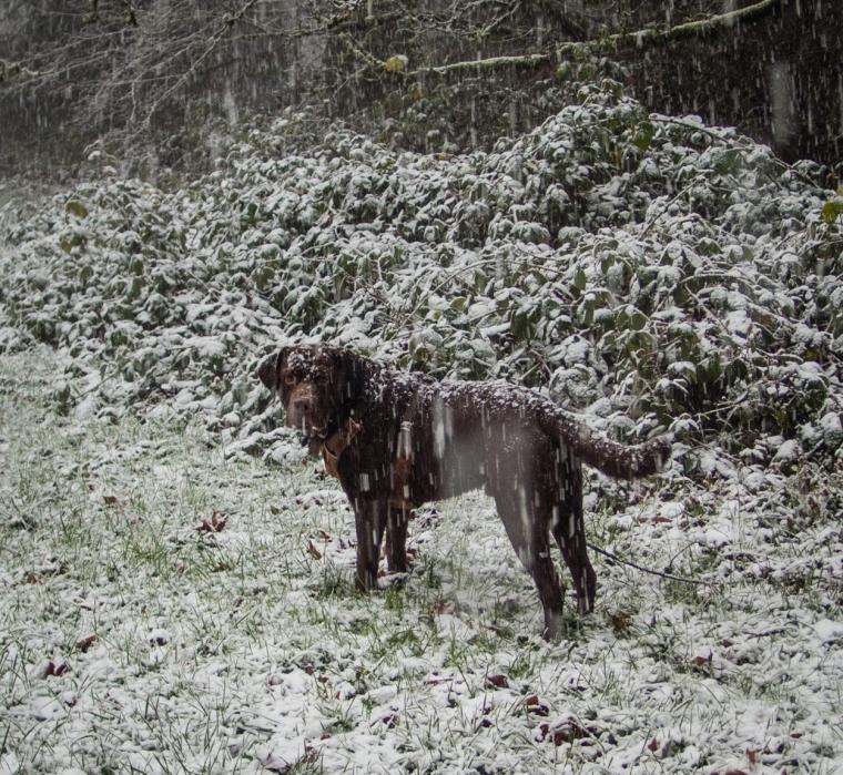 snow-in-portland